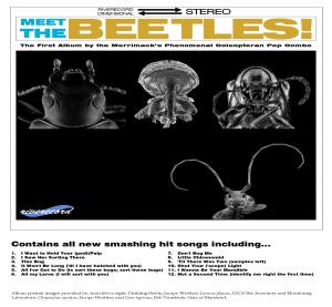 meetthebeetles_Page_1